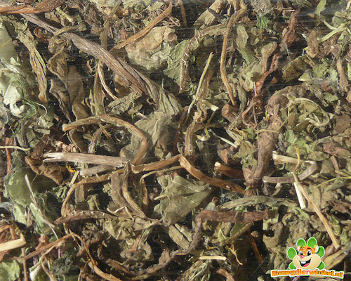 Nagertraum Dandelion Blätter 100g