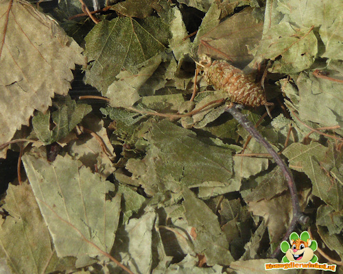 Lower trajectory Birch leaves 60 gram