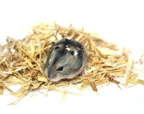 Hamster Hooi, Kruiden en Zaden