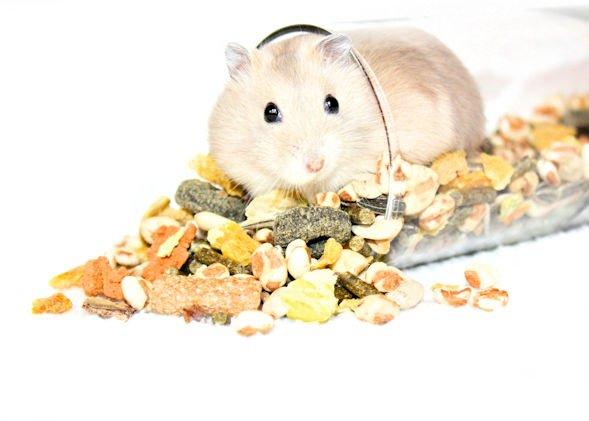 hamster feed hamster