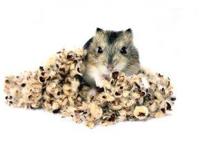 Hamster Bodembedekking