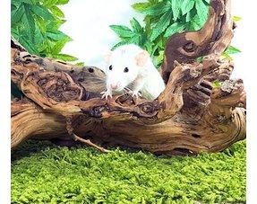 Ratten Knaagmateriaal