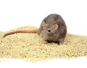 Ratten Bodembedekking