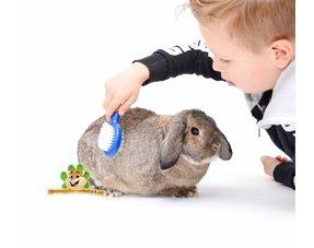Kaninchen Pflege