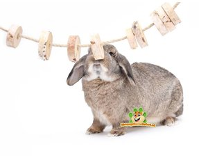 Rabbits Gnaw material