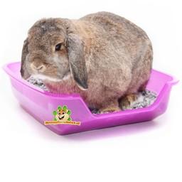 konijnen bodembedekking