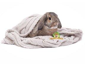 konijn hangoor speeltjes en nestmateriaal