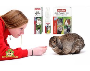 rabbits health information for your rabbit