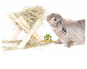 Rabbits Hay & Spices