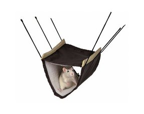 Ratten Hangmatjes