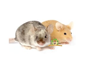 Mäuse Informationen