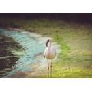 brocante Flamingo