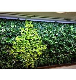 Parus LED wachsen helle grüne Wand 60cm 120 °