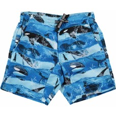 Molo swimming short Killer Whale