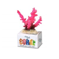 Coral Staghorn rosa