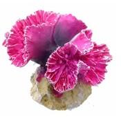 Coral Symphylia