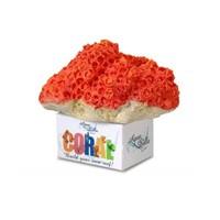 Coral Cup orange