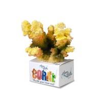 Aqua Della Coral Cauliflower yellow
