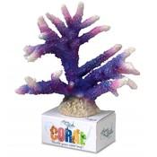 Coral Staghorn purple