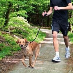 Hardlopen met de hond