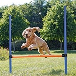 Agility Training Hond
