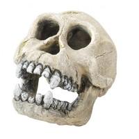 Aqua Della Skull Chimpanzee