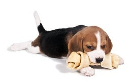 Hondensnack kopen is gezond voor je hond.
