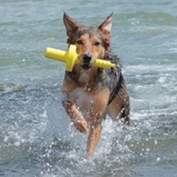 Drijvend Hondenspeelgoed