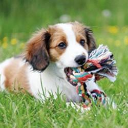 Speeltouw Hond