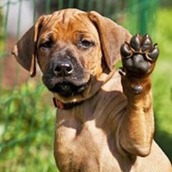 Pootverzorging Hond