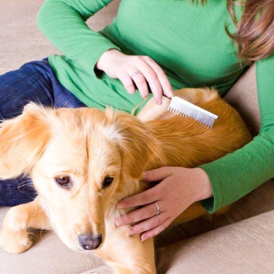 Honden Borstels & Kammen