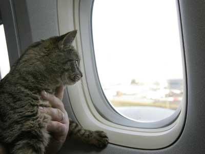 Reistas Kat Vliegtuig