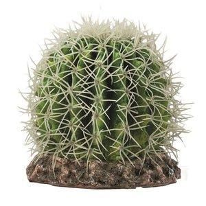 Hobby Terrano Cactus Sonora