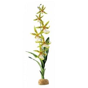 Exo Terra Spinnen Orchidee