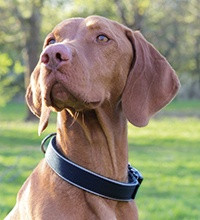 Hondenhalsband kopen