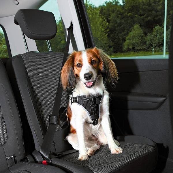 trixie auto hondentuig dog protect pets gifts. Black Bedroom Furniture Sets. Home Design Ideas