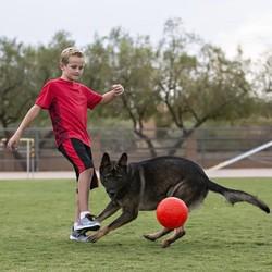 Speelbal Hond