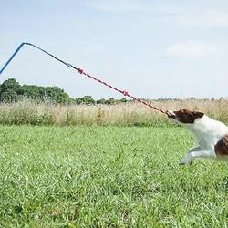 Trekspel Hond