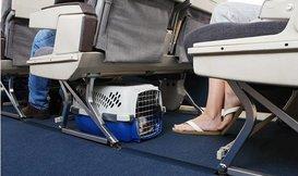 Mag ik mijn hond of kat meenemen in het vliegtuig?