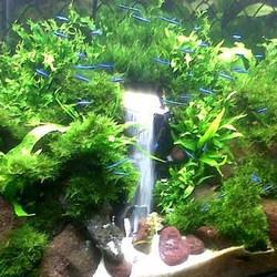 Aquarium Decoratie Waterval