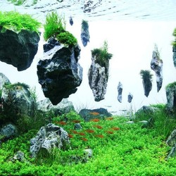 Aquarium Decoratie Avatar