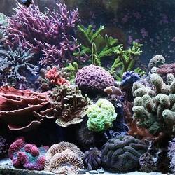 Aquarium Decoratie Kunst Koraal