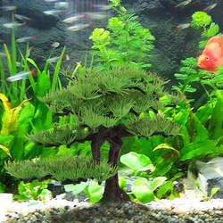 Aquarium Decoratie Kunst Planten