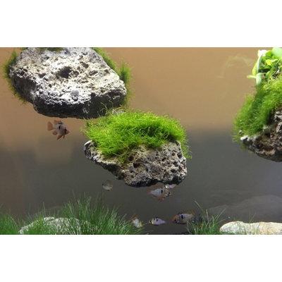 Aqua Della Floating Rock 3 met zuignap