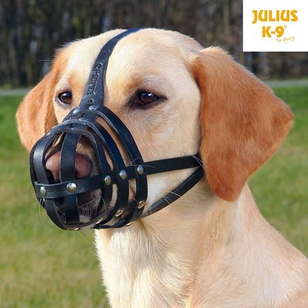 Muilkorf Hond kopen