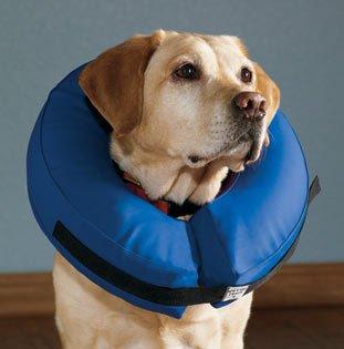 Beschermkraag Hond