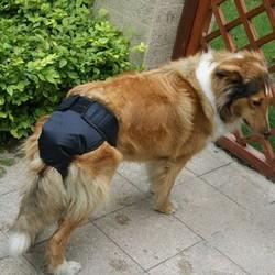 Loopsheidsbroekjes Hond