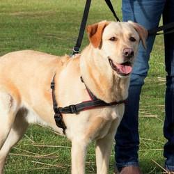Hulpmiddel Tegen Trekkende Hond
