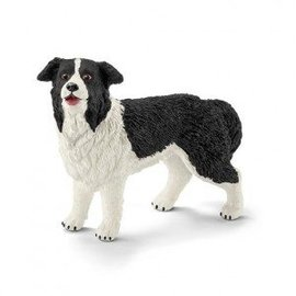 Border Collie - 16840