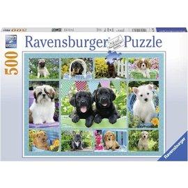 Ravensburger PU147083 - Snoezige hondjes 500 stukjes